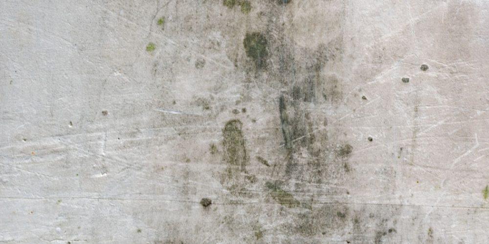 5 conseils pour lutter contre la moisissure sur les murs